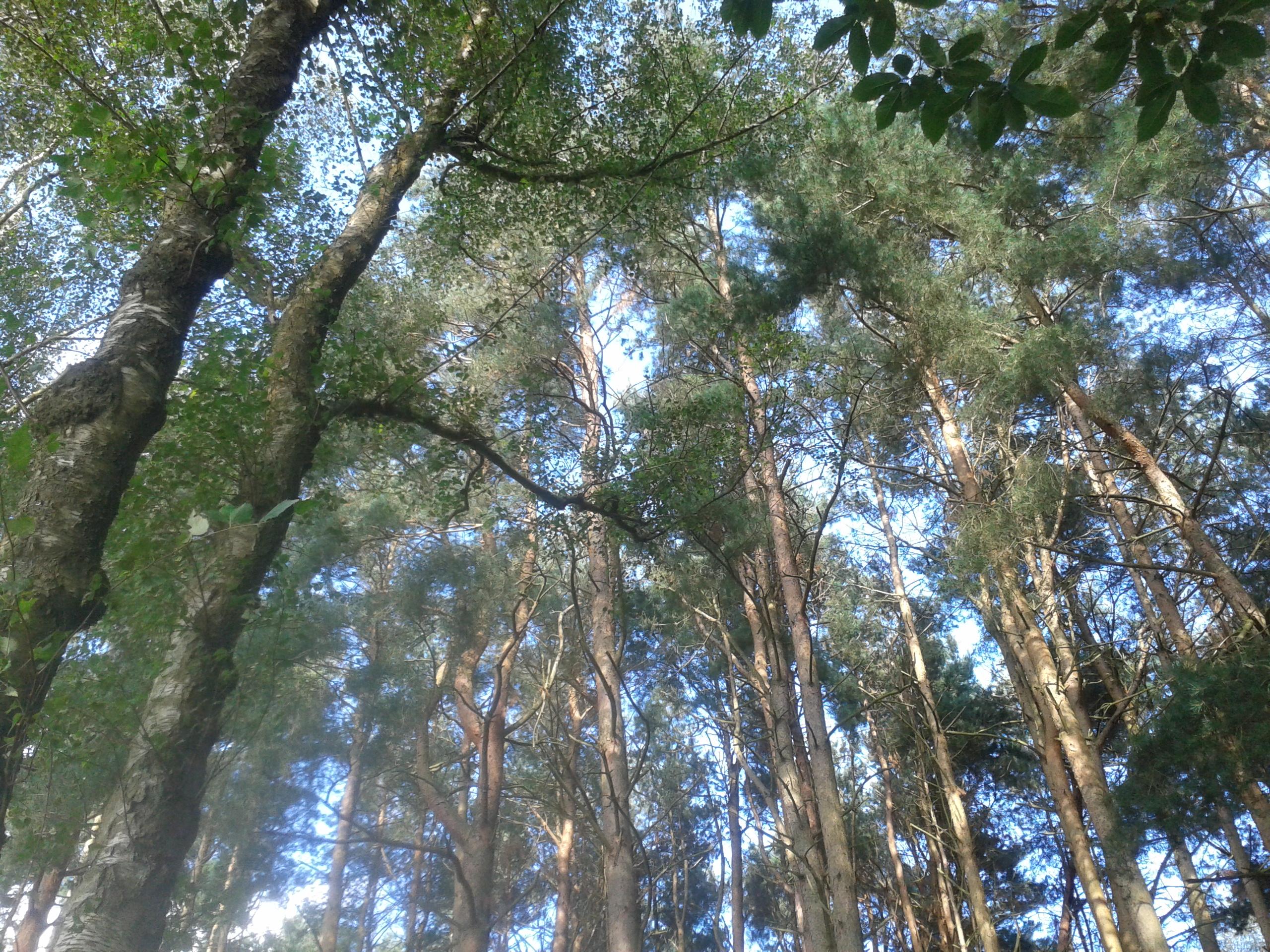Tilgate Park trees
