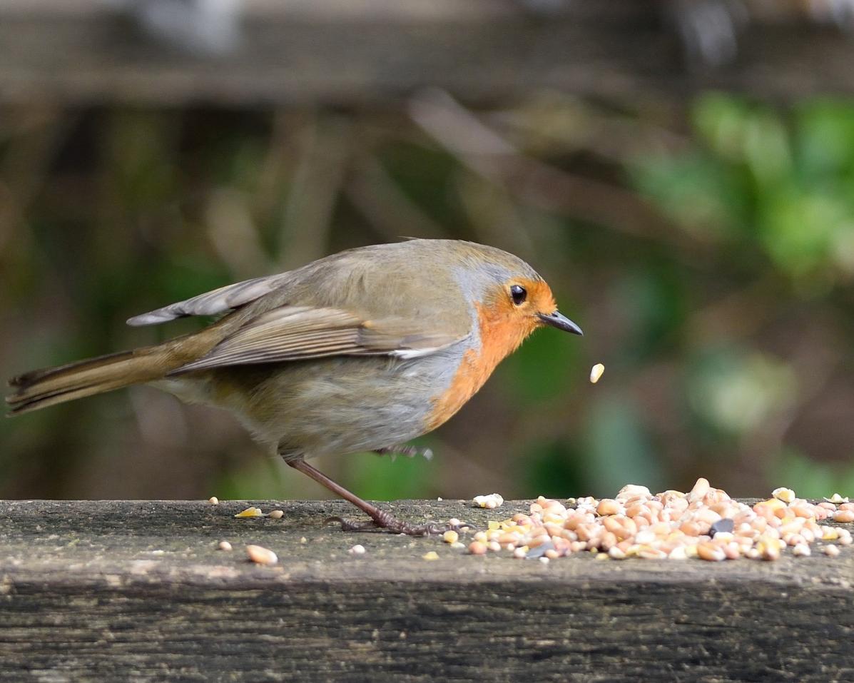Robin resize